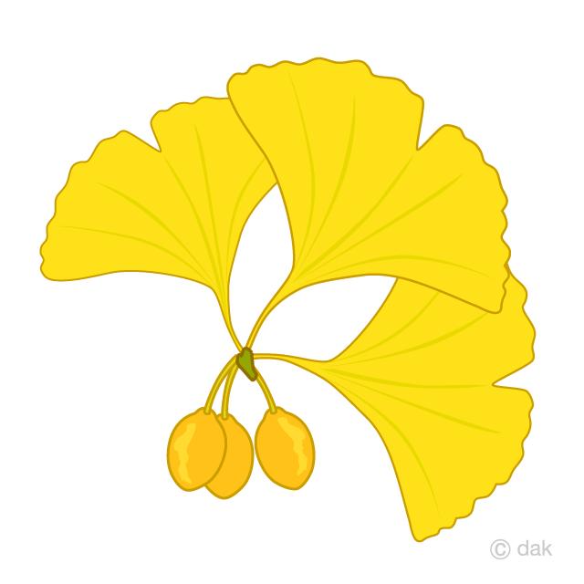 イチョウの画像 p1_16